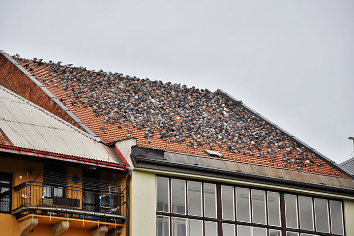 A2B Pest Control are able to install spikes to deter birds from roofs in Canvey Island.