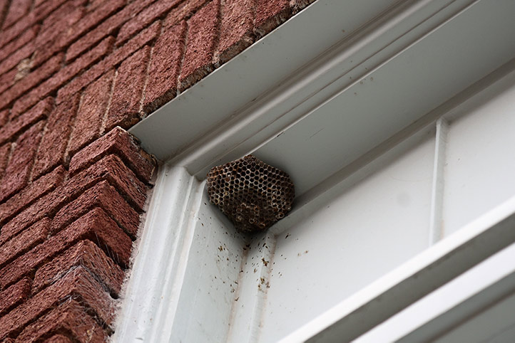 We provide a wasp nest removal service for domestic and commercial properties in Canvey Island.